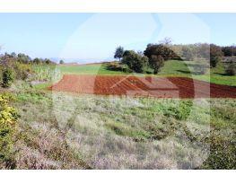 Poljoprivredno zemljište, Prodaja, Motovun, Motovun
